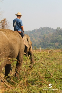 20140202_Thailand_JoannaRutkoSeitler_011