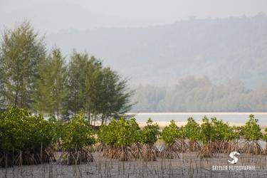 20140202_Thailand_JoannaRutkoSeitler_013