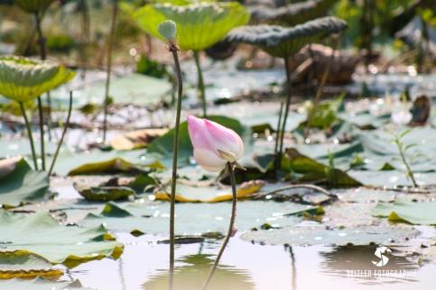 20140202_Thailand_JoannaRutkoSeitler_017